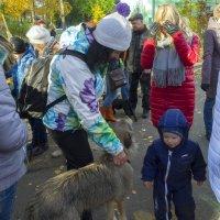 Северодвинск. Чай, собака, Пастернак... и булочки с кунжутом (дворовый праздник) :: Владимир Шибинский