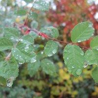 Осенний дождь :: Алексей Кузнецов