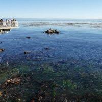 Любуемся видом на океанский залив Монтерей. На островке птицы и морские котики... :: Юрий Поляков