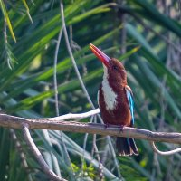 Kingfisher 27 см :: Oleg
