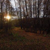 В конце прогулки солнце мне в подарок :: Андрей Лукьянов