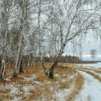 Между осенью и зимой :: Владимир Зыбин