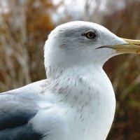 Чайка :: Александр Михайлов