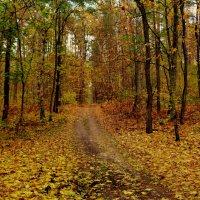 по осеннему лесу :: Александр Прокудин