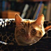 Если в доме нет кота, Значит, в доме - пустота.... :: Marina Pr. **