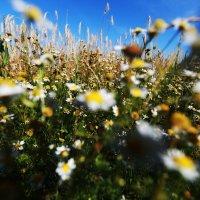 Густые зелёные поля :: Елена