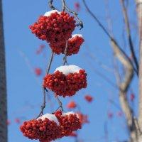 Снежные шапочки :: Наталия Григорьева