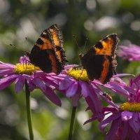 Танец бабочек. :: Владимир Пименов