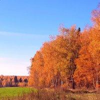 Осень в Подмосковьи :: Генрих