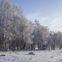 Снежный отряд выстроился в ряд :: Светлана marokkanka