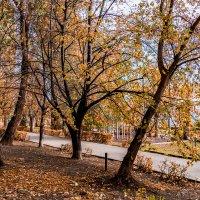 Осень - пора золотая :: Cтанислав Анатольевич Курбатов