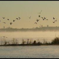 Осенняя пора на Волге (4) :: Юрий ГУКОВЪ