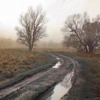 Осенних истин неизбежность... :: Лесо-Вед (Баранов)