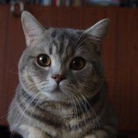 Охранный Кот :: виктор ушаков