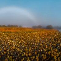 Туманная радуга над осенним полем лотосов :: Фёдор. Лашков