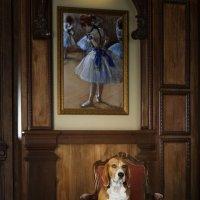 Портрет собаки в интерьере :: Тата Казакова