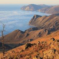Утренний туман :: Владимир Собардахов