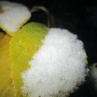 Утро. Первый снег. :: Алексей Кузнецов