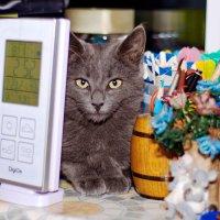 Найди коте :: Андрей Самуйлов