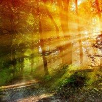 утро в туманном лесу :: Elena Wymann