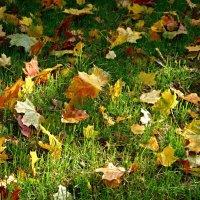 Прикоснёмся к пожухлой листве, приласкав эту хрупкую старость... :: san05 -  Александр Савицкий