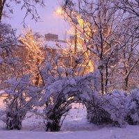 первый снег :: tina kulikowa