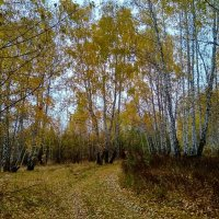 Красавица Осень ... :: Татьяна Котельникова