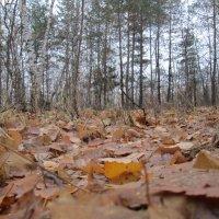Прогулка по осеннему лесу :: Алексей Кузнецов