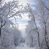 Дорога в зимнюю сказку :: Светлана marokkanka