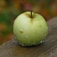 просто яблоко под дождем... :: НАТАЛЬЯ