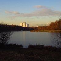 Лебедянский пруд встал :: Андрей Лукьянов