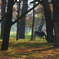 Парковый пейзаж. :: barsuk lesnoi
