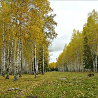 Осень :: Leonid Rutov