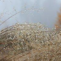 Осенние  травы в росе замерзшей.. :: Ната Волга