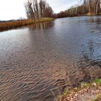Осень. Река. :: vodonos241