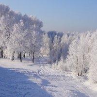 Первая лыжня :: Наталия Григорьева