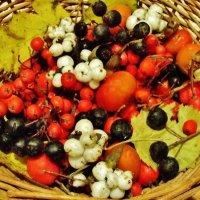 Осенние плоды :: Aida10