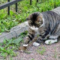 Кошки - мышки... :: Евгений Яхим