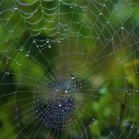 Роса на паутине :: Сергей Чиняев