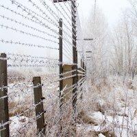 Колючий забор железная нить. :: Вадим Басов