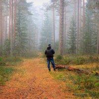 Осенние туманы :: Павлова Татьяна Павлова