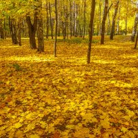 Золотой ковёр осени :: Владимир Жданов