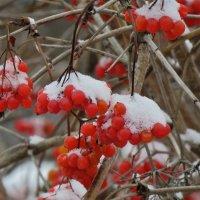 зимняя ягода :: НАТАЛЬЯ