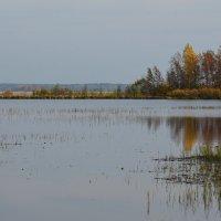Осенняя картина :: Николай Танаев