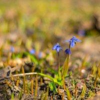 немного весны :: Ustas FritZZZ