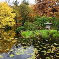 В Японском саду. :: Александр Орлов