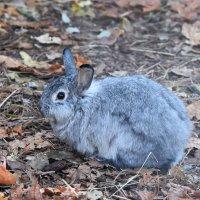 Дикий кролик... :: Наташа *****