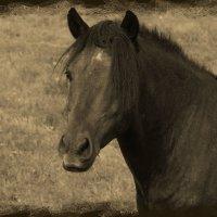 Лошадка с модной причёской... :: Anatol L