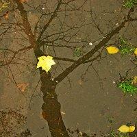 Вот такое отражение... :: Vladimir Semenchukov