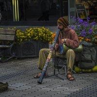 Музыкант :: Сергей Цветков